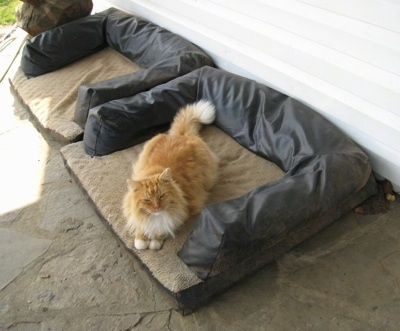 Pumpkin the cat laying on the new outside cat Bed