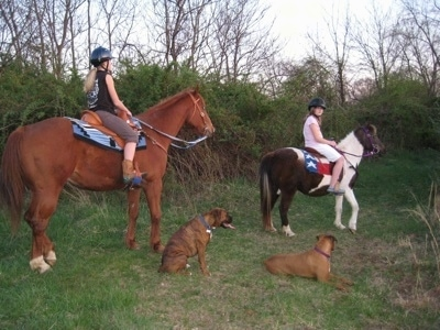 Allie and Bruno the Boxers sitting and laying down next to Amie and Sara who are on the horse and the pony