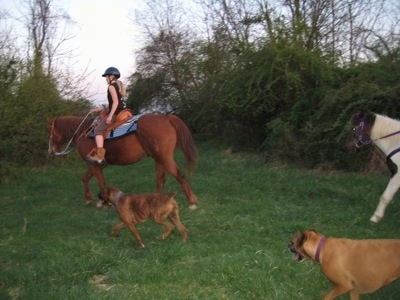 Allie and Bruno the Boxer running alongside Amie who is on a horse and Jazzmine the pony