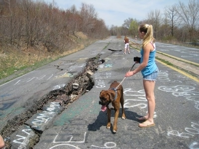 Bruno the Boxer standing on the brittle road of Centralia while Amie holds his leash and Sara is in the background