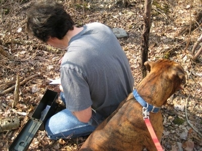 Bruno the Boxer sitting next to his owner who is looking inside a newly found Geocache