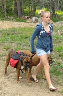 Amie walking Allie and Bruno the Boxers