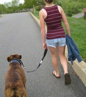Amie walking Bruno the Boxer down the street