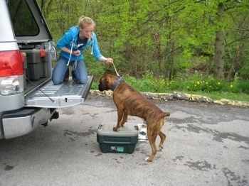 Amie kneeling on the back of the truck tailgate slightly pulling up on Brunos leash as he begins to jump in with his front paws on an action packer container