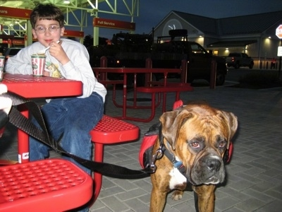 Bruno the Boxer waiting next to a red bench with Eric who is eating a water ice from Ritas