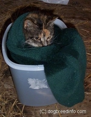 Close Up - A Cat is wrapped in a towel and it is inside of a container that has epsom salts and water in it.