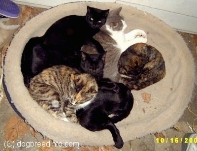 A Cluster of cats Cuddled together in a dog bed