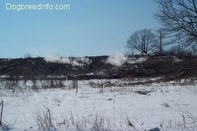 A Steaming hill in Centralia Pa