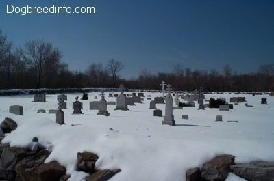 Snowy tombstones in a cemetary