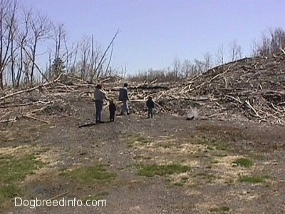 Four People in a field and they are looking at Dead trees