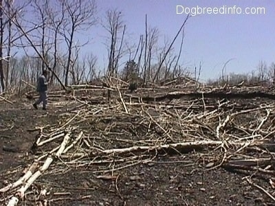 A person standing in front of a bunch of dead sticks