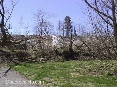 Fallen Trees in a field with steam coming from the ground
