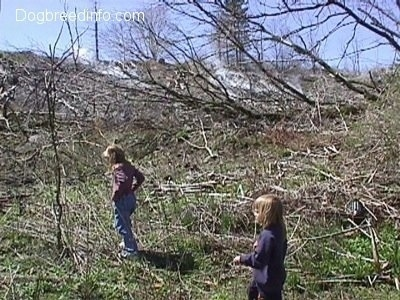 Two kids are inside of fallen dead trees with steam coming from the ground in the background