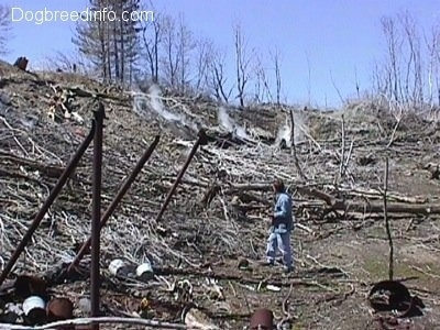 the bottom of a hill filled with dead fallen trees