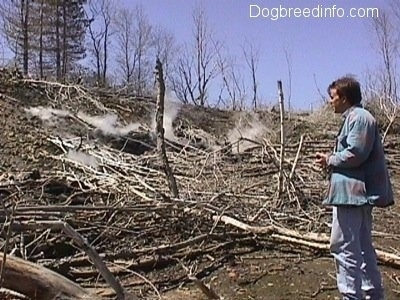 A Person looking over the fallen dead trees