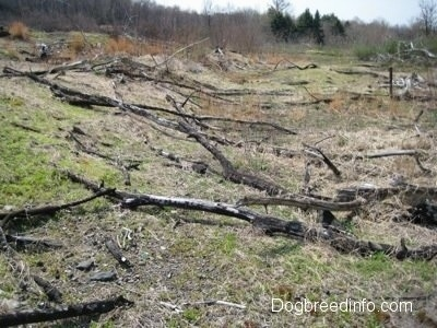 Dead fallen down trees in the fields of Centralia PA