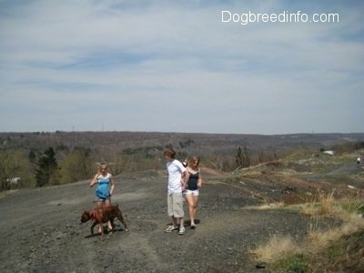 Bruno the Boxer and Three other people walking around the dirt path in Centralia