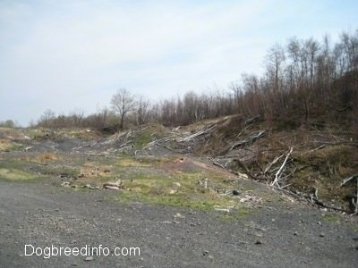 Fallen Dead Trees and dirt paths in Centralia Pa