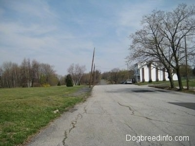 The road leading to a Singular house on the Right side in Centralia, Pa