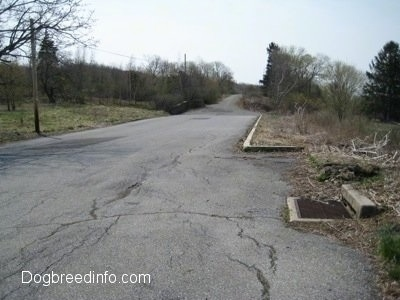 An Empty road in Centralia, Pa