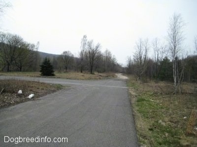 Empty Streets and a path way in Centralia Pa