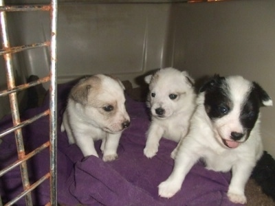 white ear is named Buttercup, and the black and white pup is named Spot.