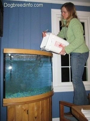 A lady is pouring a final amount of water into the fish tank