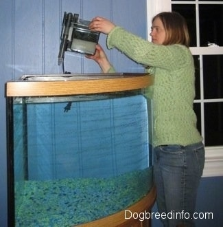 Fish Tank Filter on Setting Up A Fresh Water Fish Aquarium  Fresh Water Fish Tank
