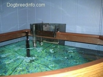 Small Fish Tank on When You First Add Your Gravel  It Is Normal To Have Small Pieces