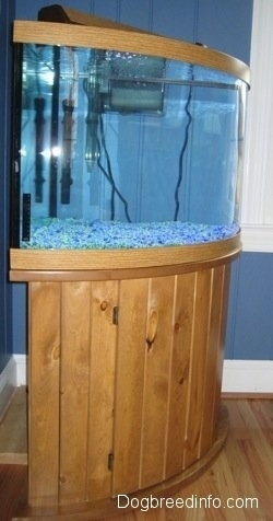Setting Up A Fresh Water Fish Aquarium Fresh Water Fish Tank