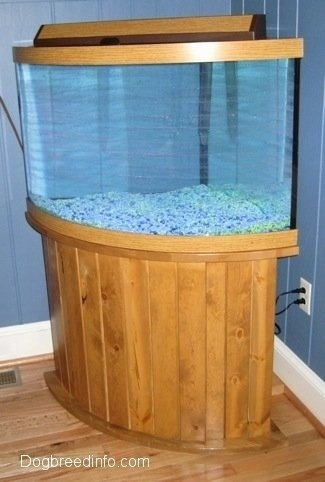 A finished aquarium with no fish