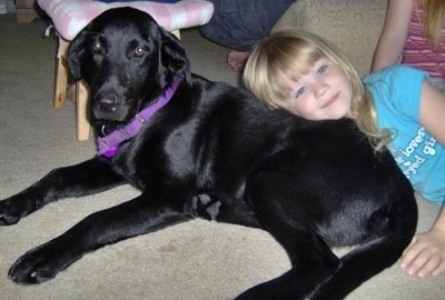 A black Labrador Retriever dog is laying on a tan carpet with a small blonde haired girl in a teal-blue shirt leaning on its back. There is a wooden stool with a pink and white cushion behind them and a second kid in a pink and red striped shirt behind them.