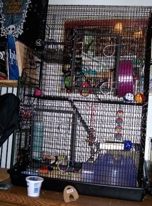 A three story rat cage.