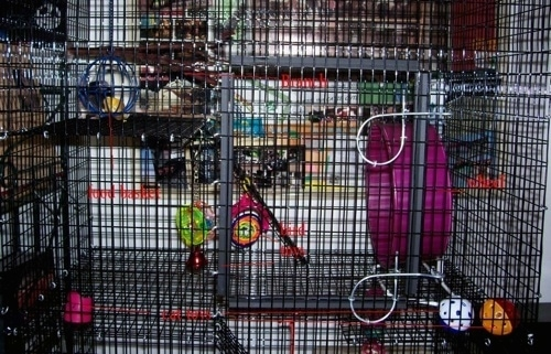 The third level of a Rat cage that has rat toys all over it.