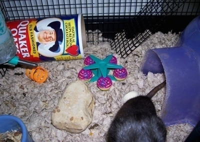 The bottom level of a Rat cage. There is a plastic igloo, toys and in the background a turned over can of Quaker Oats.