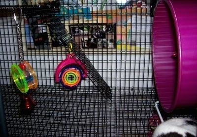 The second level of a rat cage with a ramp, toys and a tunnel.