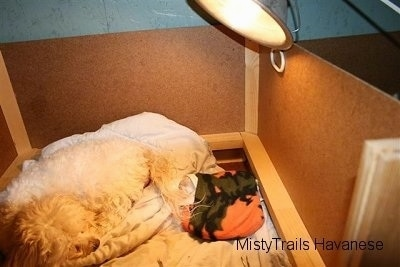 The first puppy wrapped warmly laying under the lamp, while the dam pushes out the next pup