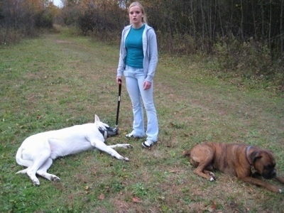 A White German Shepherd laying down on grass with a lady holding its leash and A brown brindle Boxer is laying down adjacent to the Shepherd.