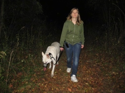 AWhite German Shepherd being walked on a trail in the woods by a lady in a green jacket.