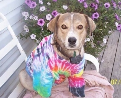 Ausky wearing a tye dye shirt sitting outside