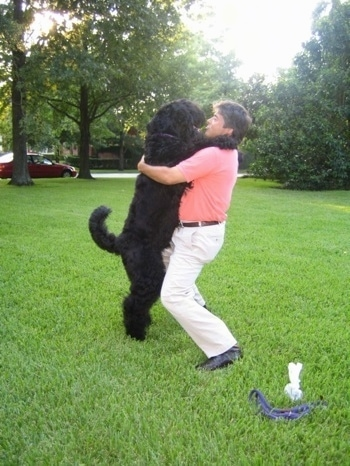 Boris the Black Russian Terrier hugging his owner