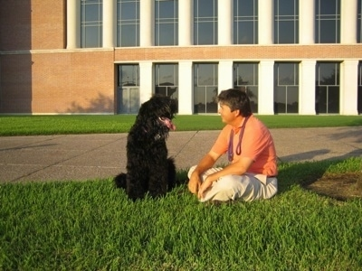 Boris the Black Russian Terrier sitting next to its owner with its mouth open and tongue out in front of a building