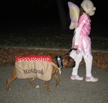 Bruno the Boxer wearing a hot dog costume being walked by a girl dressed as a flying pig