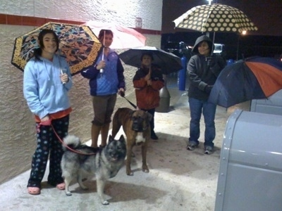 Bruno the Boxer with Tia the Norwegian Elkhound and people standing in front of a Wawa