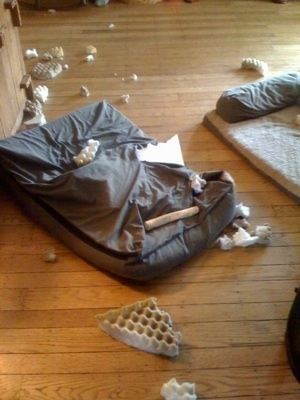 Chewed up dog bed