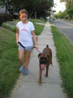 Sara and Bruno the Boxer walking down the street with zero distractions