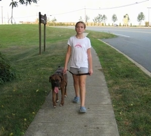 Sara walking Bruno the Boxer down a sidewalk