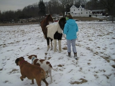 Amie in front of Jasmin the Pony while Allie the Boxer and Darley the Beagle Mix walk around the snow