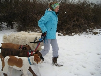 Amie walking Five dogs in snow