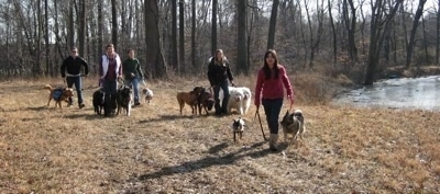 Rusty the Golden Retriever, Shadow and Meadow the Shiloh Shepherds, Darley the Beagle mix, Allie and Bruno the Boxers, Tundra and Tacoma the Great Pyrenees, Twiggy the Min Pin and Tia the Norwegian Elkhound walking with there respective owners